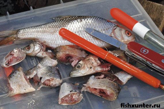 куски рыбы на налима