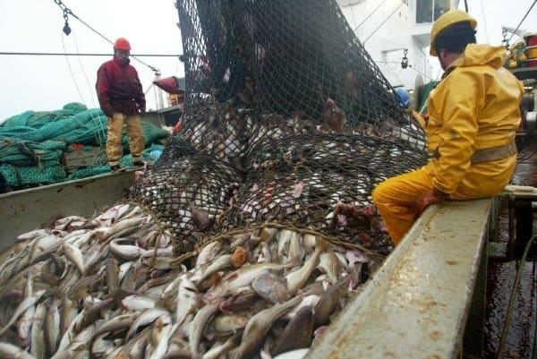 промышленный лов рыбы в сибири