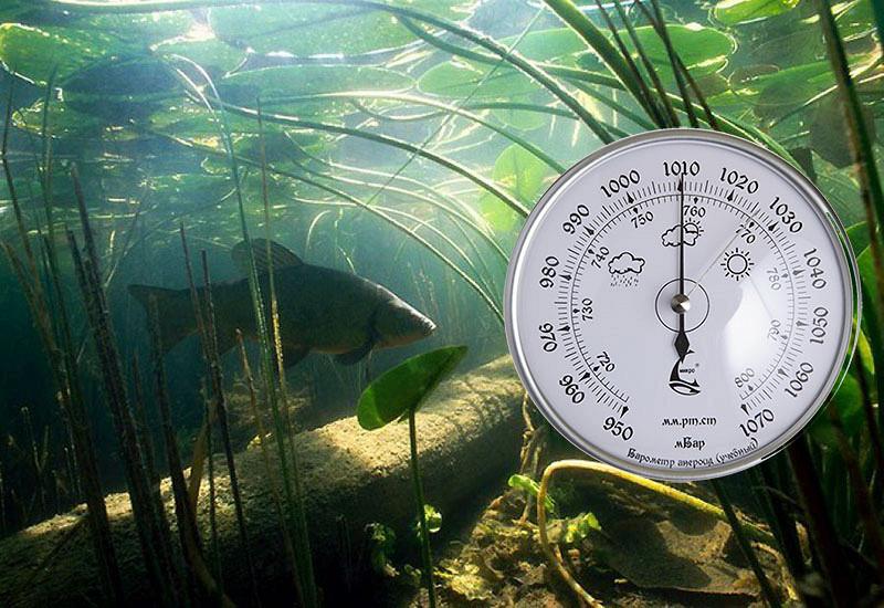 Какое давление должно для ловли рыбы