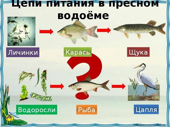 Питание рыбы в пресной воде