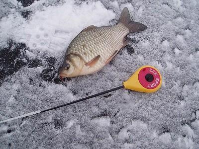 Ловля карася зимой на мормышку