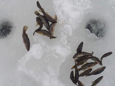 Особенности рыбалки на ротана