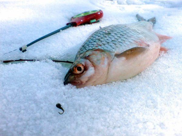 зимняя снасть для ловли плотвы